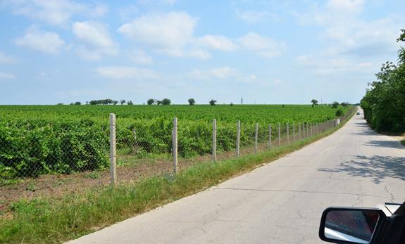 Moldovan Wineries